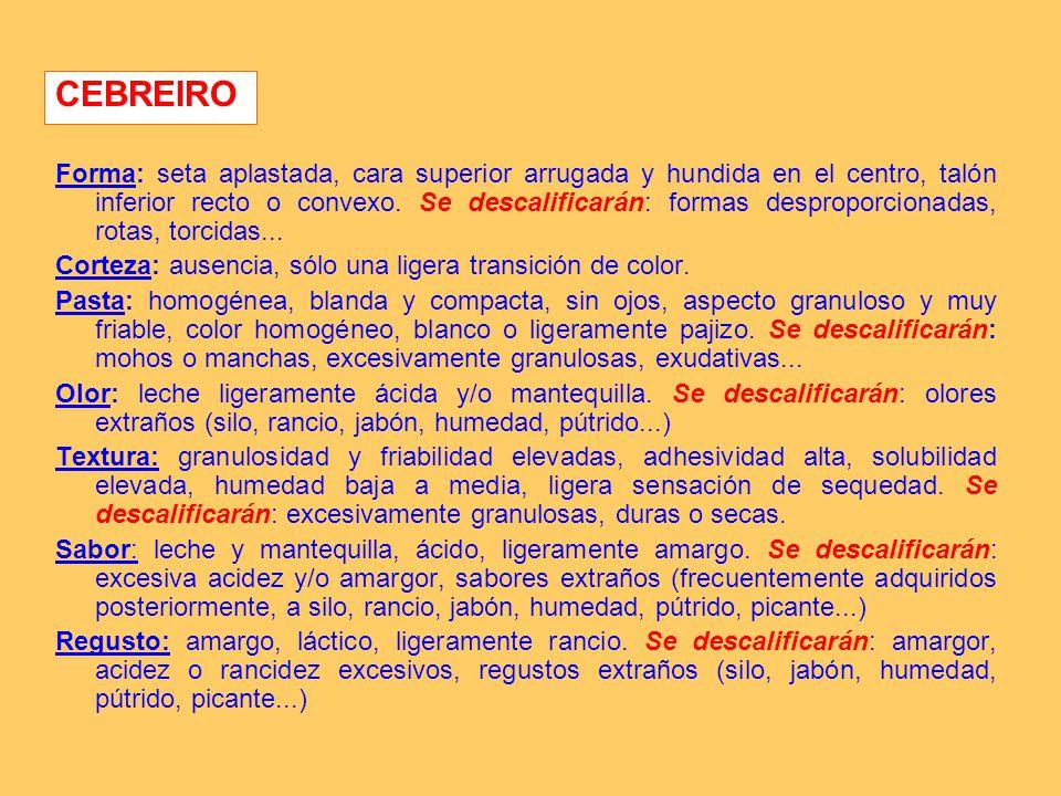 CEBREIRO