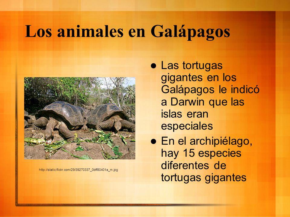 Los animales en Galápagos
