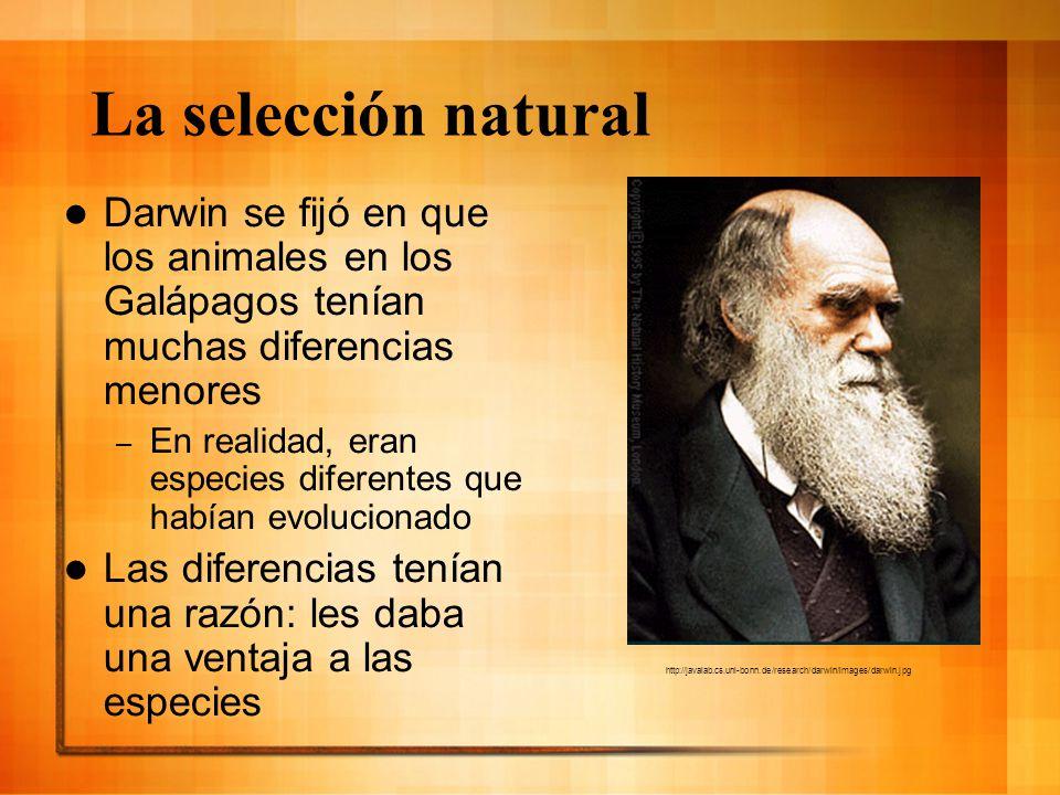 La selección natural Darwin se fijó en que los animales en los Galápagos tenían muchas diferencias menores.