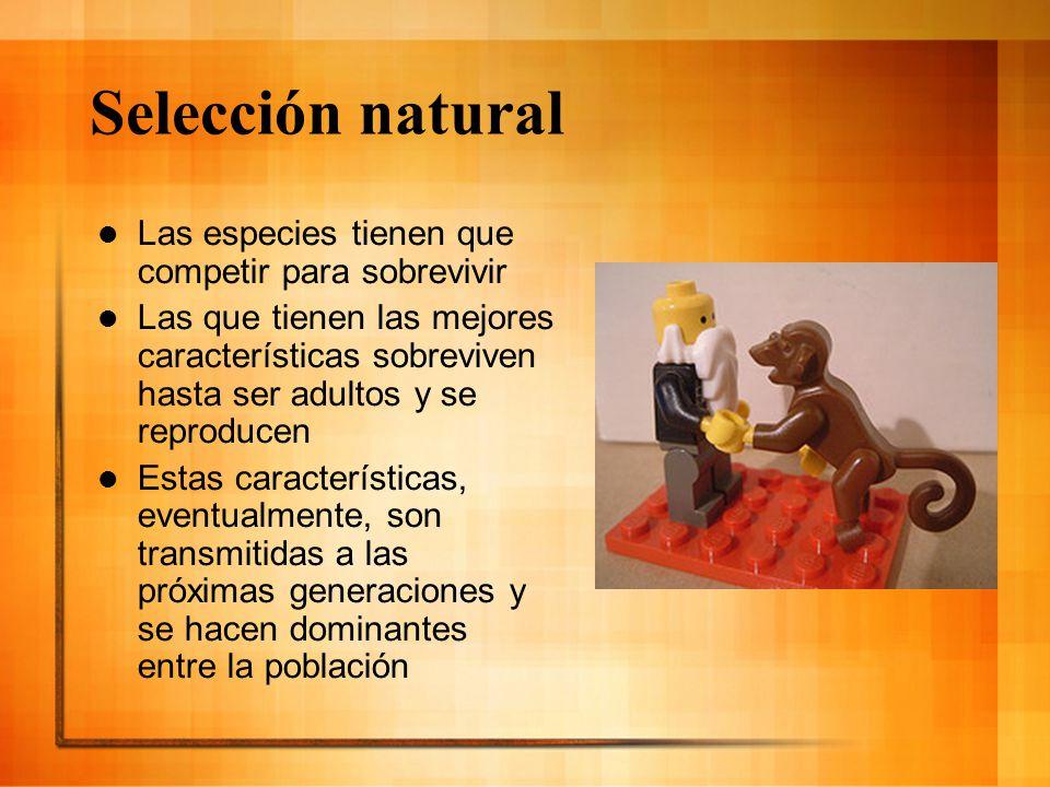 Selección natural Las especies tienen que competir para sobrevivir