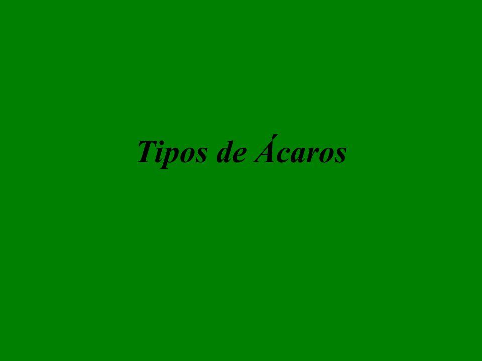 Tipos de Ácaros