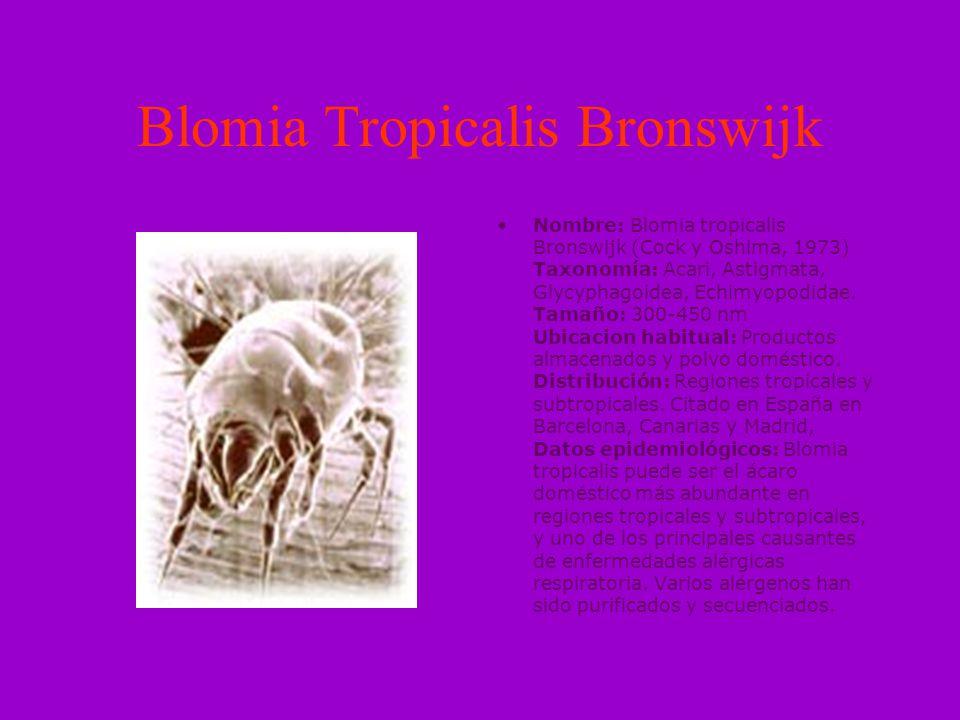 Blomia Tropicalis Bronswijk