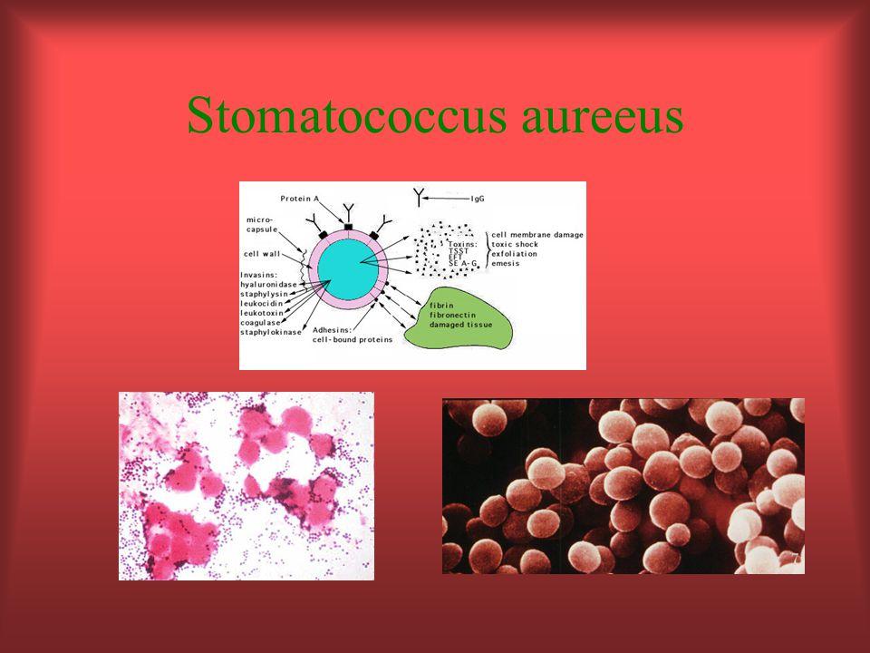 Stomatococcus aureeus