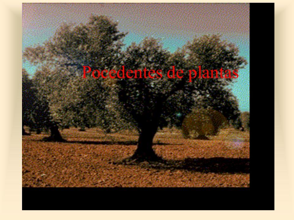 Pocedentes de plantas