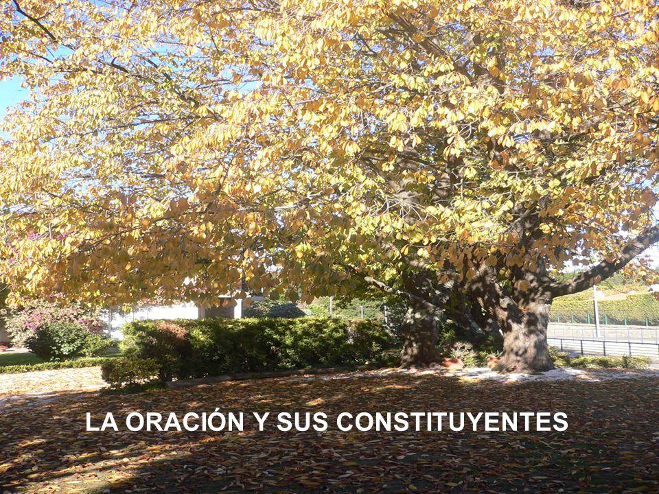 LA ORACIÓN Y SUS CONSTITUYENTES