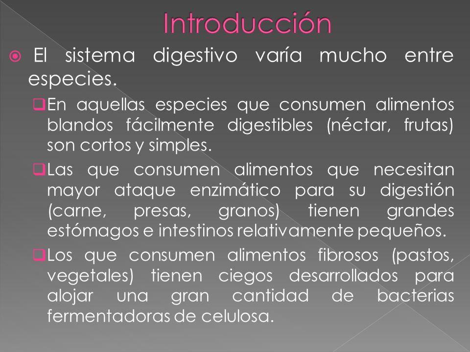 Introducción El sistema digestivo varía mucho entre especies.