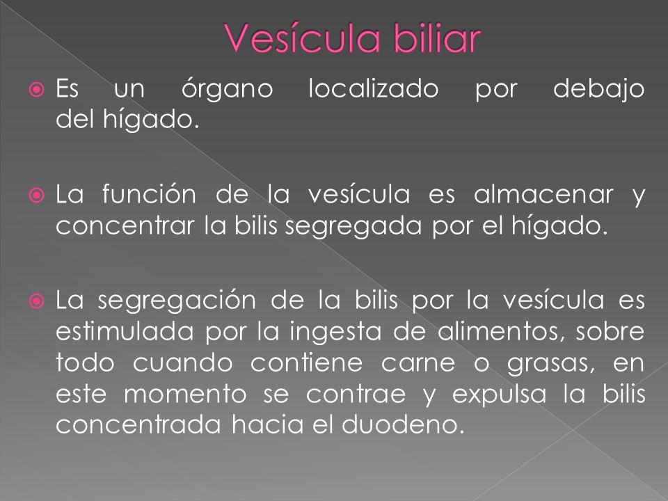 Vesícula biliar Es un órgano localizado por debajo del hígado.
