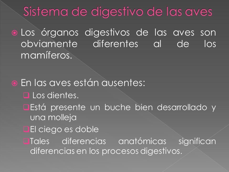 Sistema de digestivo de las aves