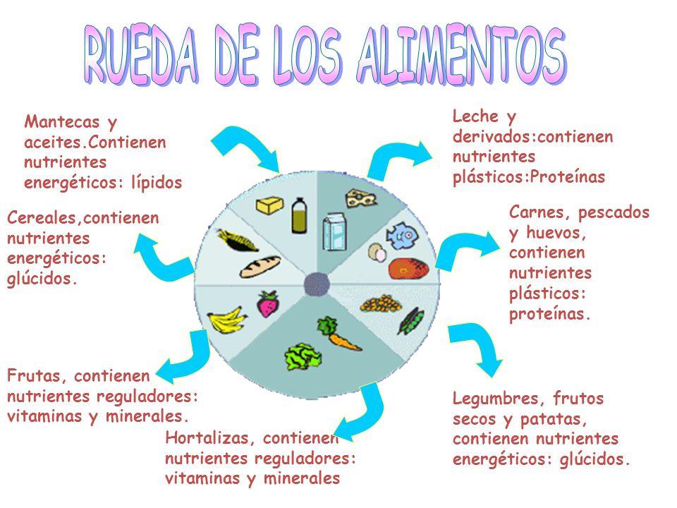 RUEDA DE LOS ALIMENTOS Leche y derivados:contienen nutrientes plásticos:Proteínas. Mantecas y aceites.Contienen nutrientes energéticos: lípidos.