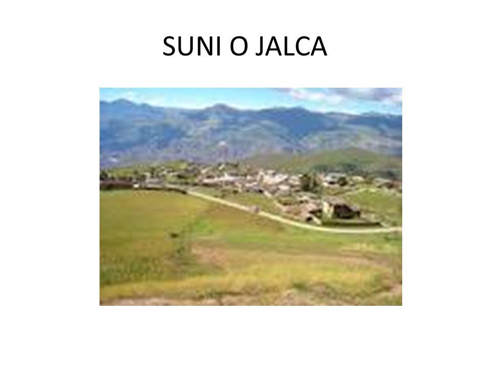 SUNI O JALCA