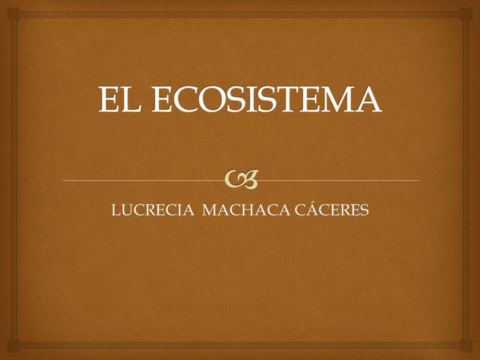 LUCRECIA MACHACA CÁCERES