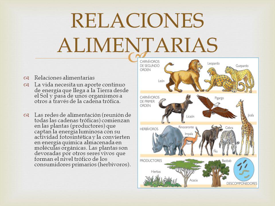 RELACIONES ALIMENTARIAS