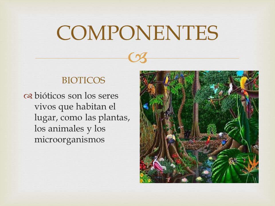 COMPONENTES BIOTICOS BIOTICOS