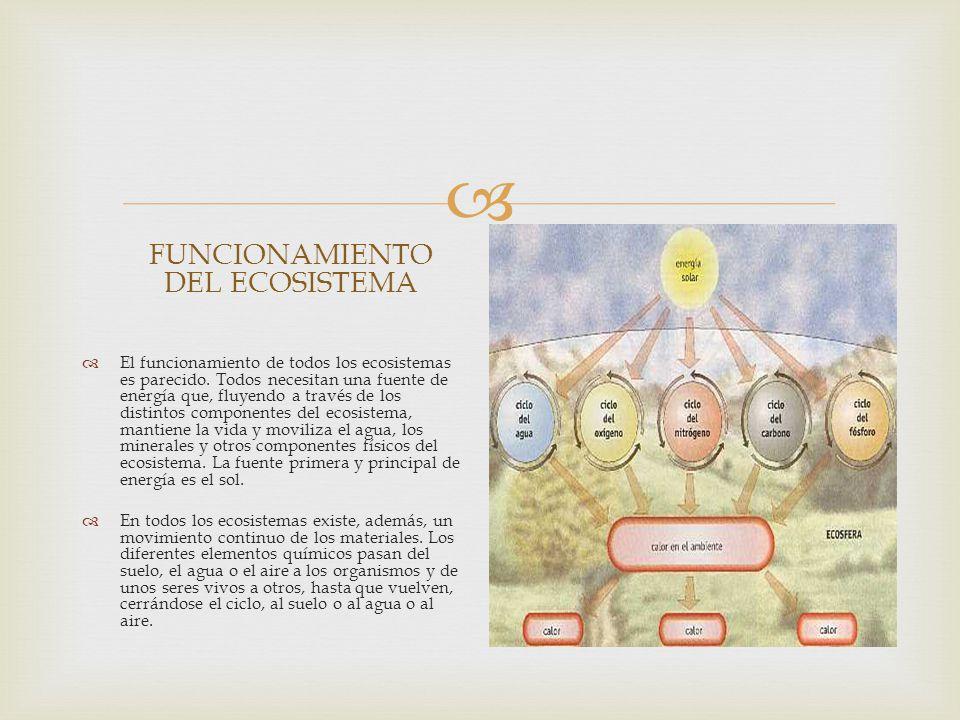FUNCIONAMIENTO DEL ECOSISTEMA