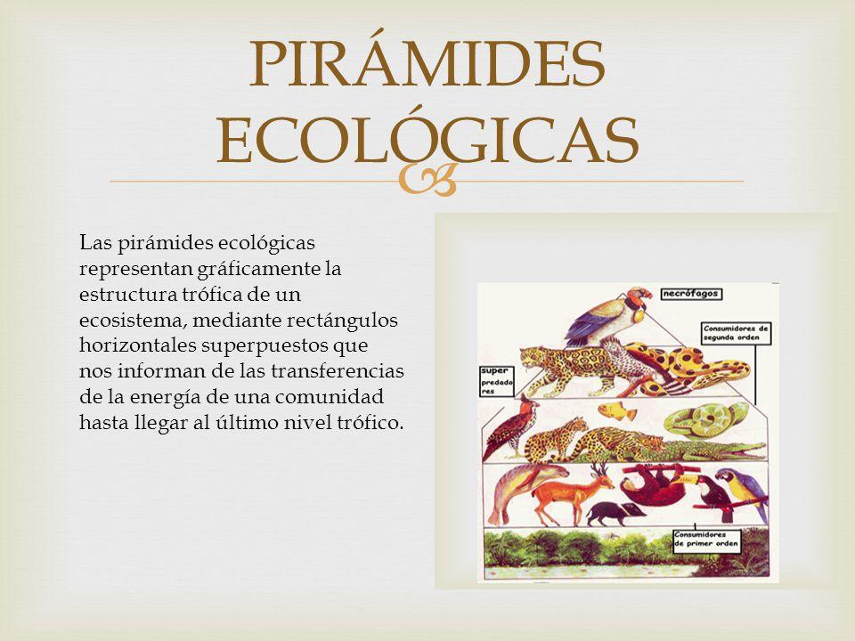 PIRÁMIDES ECOLÓGICAS