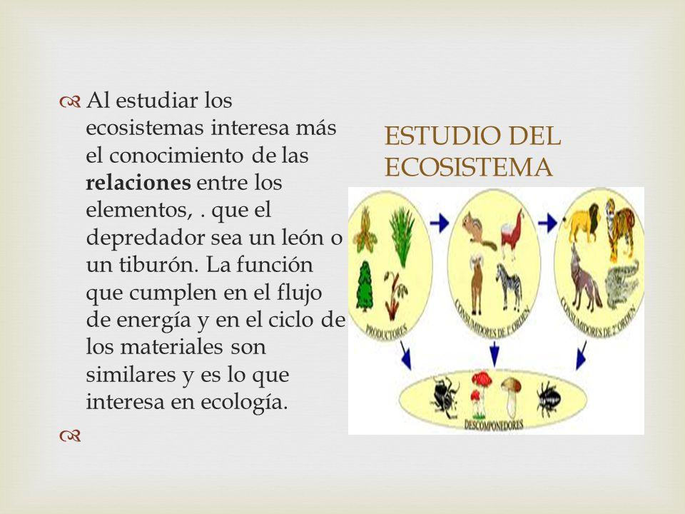 ESTUDIO DEL ECOSISTEMA