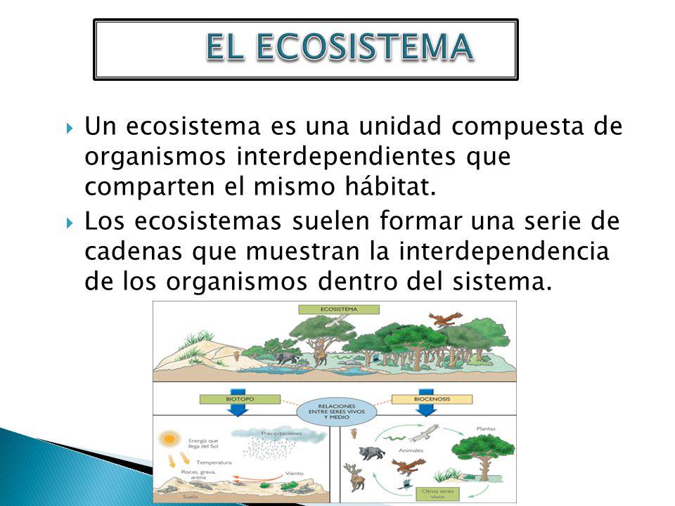 EL ECOSISTEMA Un ecosistema es una unidad compuesta de organismos interdependientes que comparten el mismo hábitat.