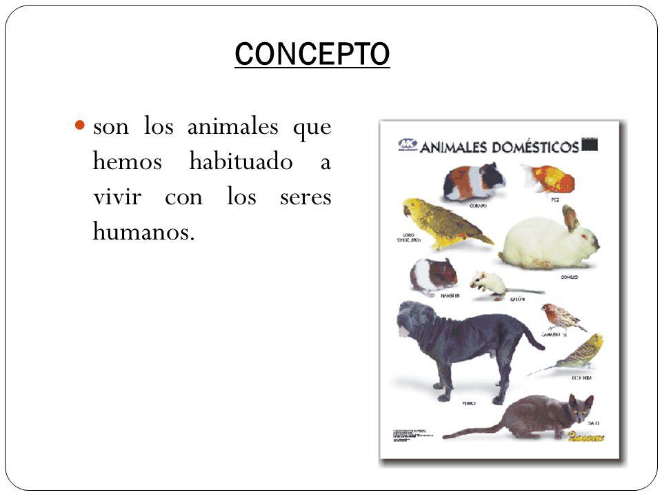 CONCEPTO son los animales que hemos habituado a vivir con los seres humanos.