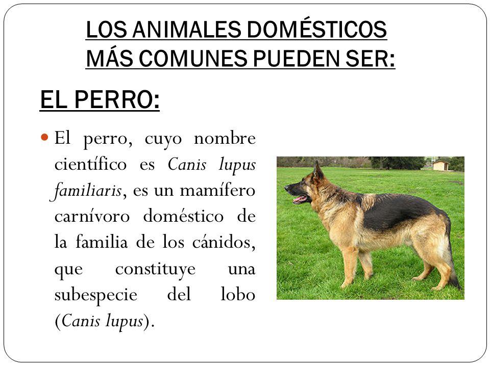 LOS ANIMALES DOMÉSTICOS MÁS COMUNES PUEDEN SER: