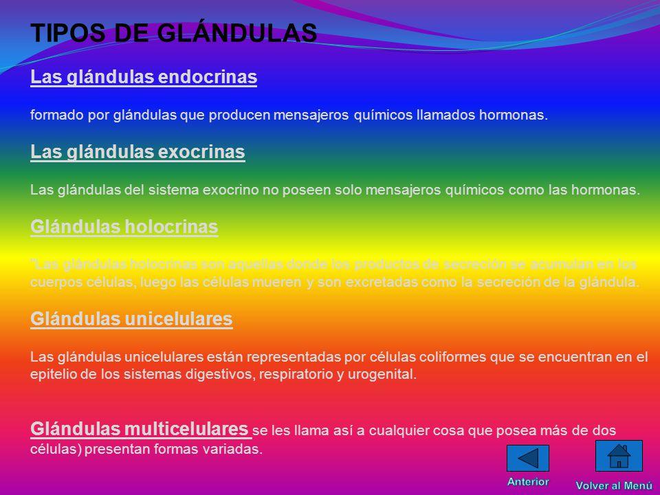 TIPOS DE GLÁNDULAS Las glándulas endocrinas formado por glándulas que producen mensajeros químicos llamados hormonas.