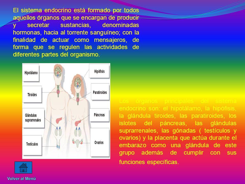 El sistema endocrino está formado por todos aquellos órganos que se encargan de producir y secretar sustancias, denominadas hormonas, hacia al torrente sanguíneo; con la finalidad de actuar como mensajeros, de forma que se regulen las actividades de diferentes partes del organismo.