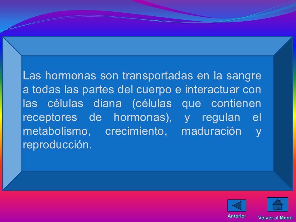 Las hormonas son transportadas en la sangre a todas las partes del cuerpo e interactuar con las células diana (células que contienen receptores de hormonas), y regulan el metabolismo, crecimiento, maduración y reproducción.