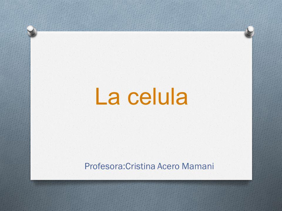 Profesora:Cristina Acero Mamani