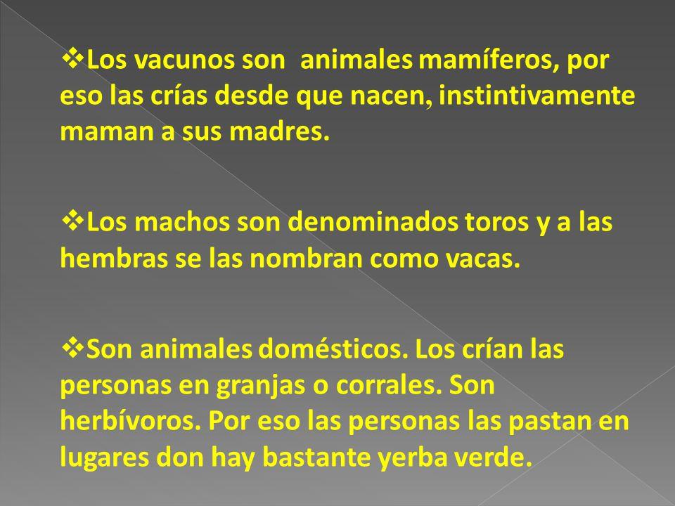 Los vacunos son animales mamíferos, por eso las crías desde que nacen, instintivamente maman a sus madres.