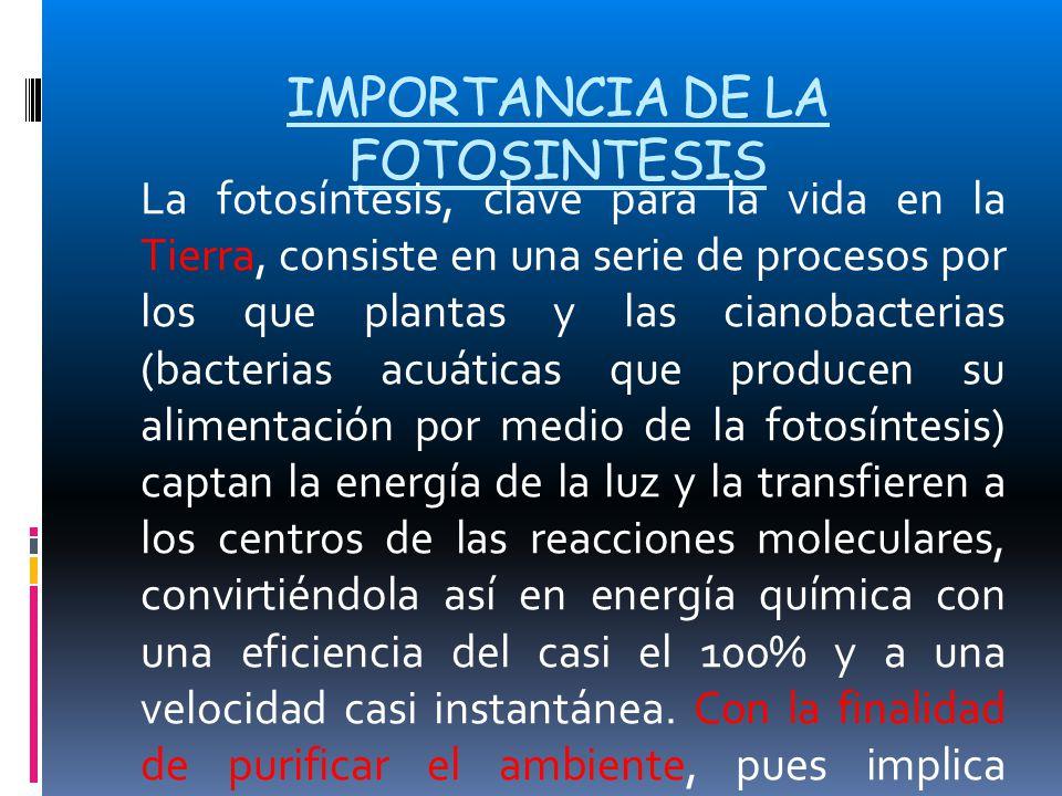 IMPORTANCIA DE LA FOTOSINTESIS