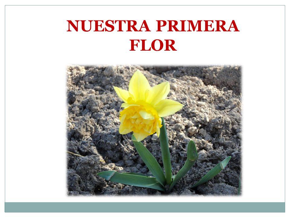 NUESTRA PRIMERA FLOR