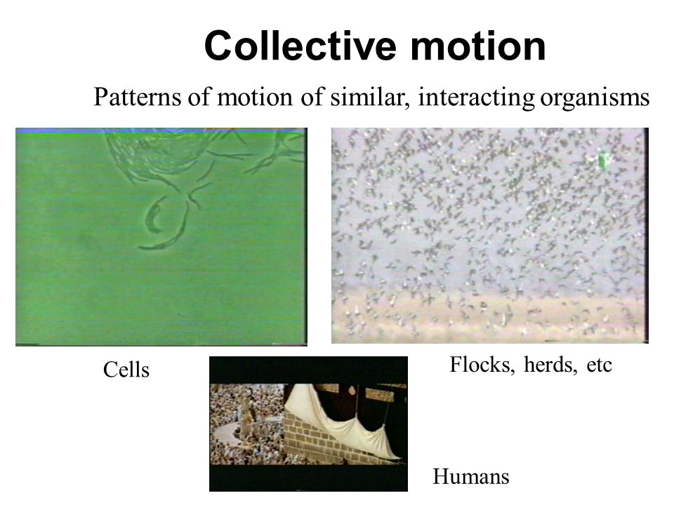 Collective motion Patterns of motion of similar, interacting organisms