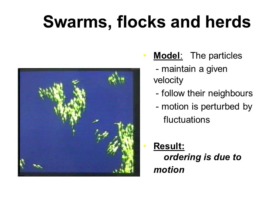 Swarms, flocks and herds