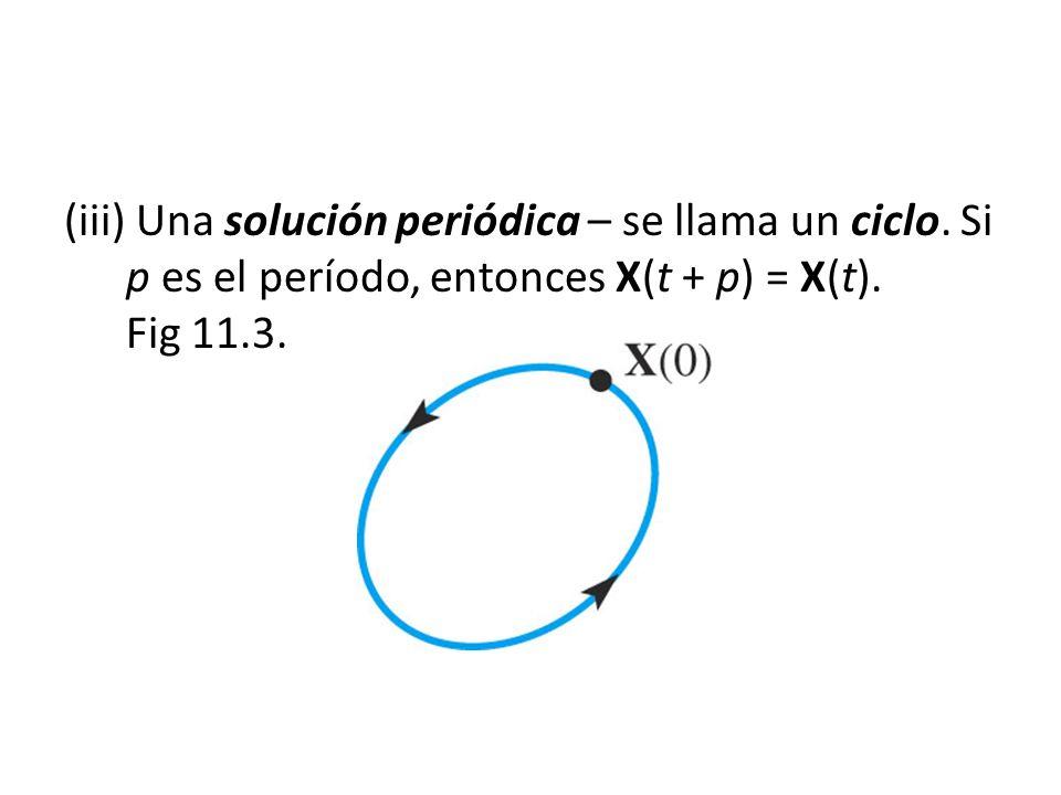 (iii) Una solución periódica – se llama un ciclo