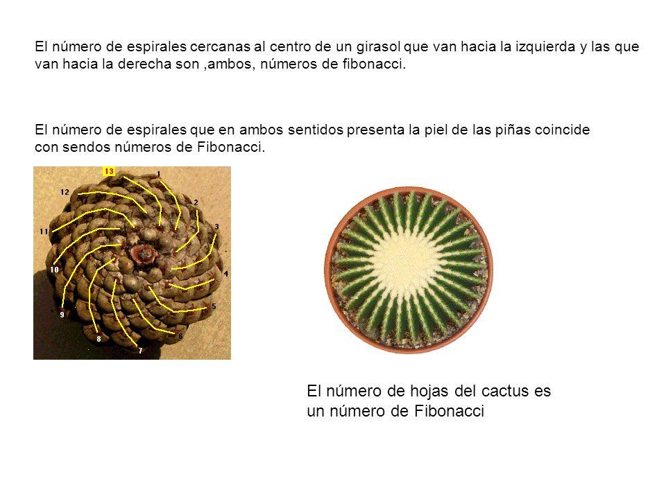 El número de hojas del cactus es un número de Fibonacci