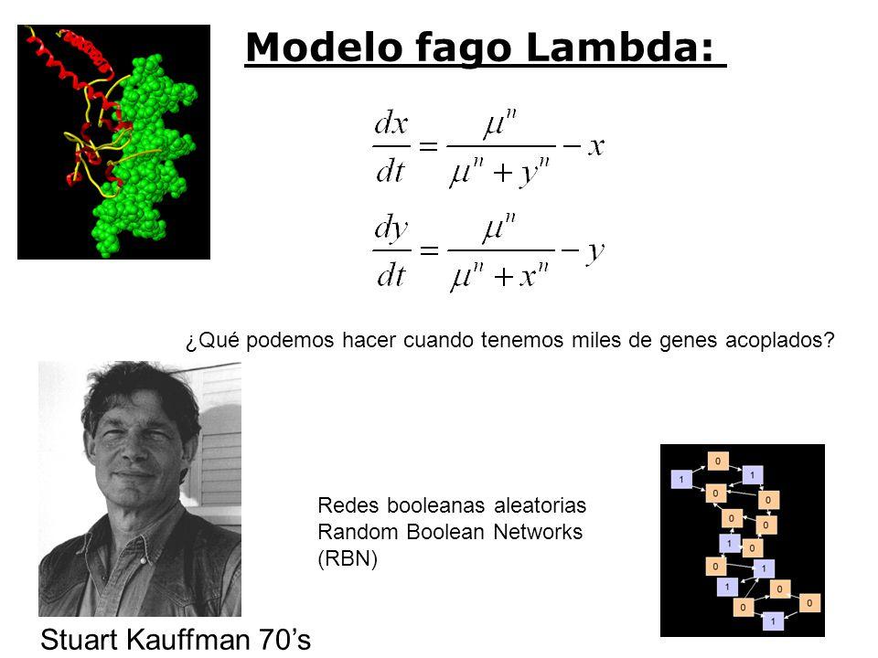 Modelo fago Lambda: Stuart Kauffman 70's