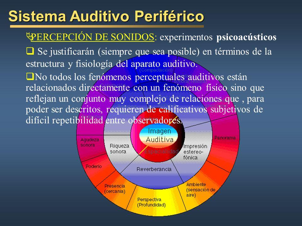 Sistema Auditivo Periférico