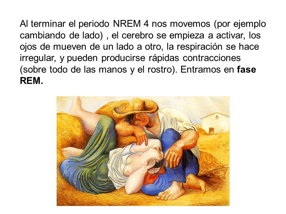 Al terminar el periodo NREM 4 nos movemos (por ejemplo cambiando de lado) , el cerebro se empieza a activar, los ojos de mueven de un lado a otro, la respiración se hace irregular, y pueden producirse rápidas contracciones (sobre todo de las manos y el rostro).