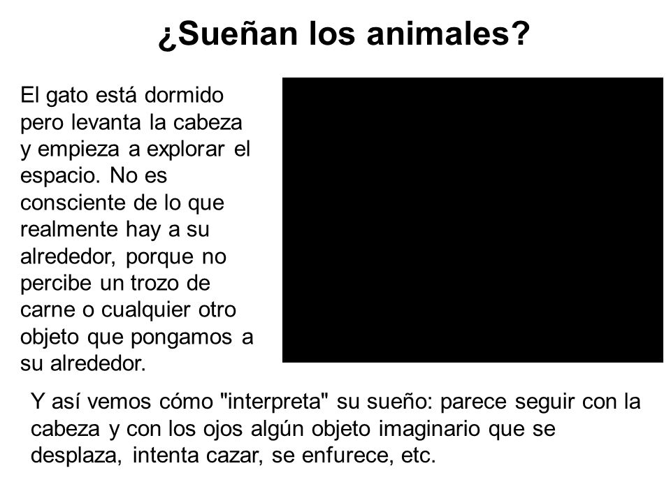 ¿Sueñan los animales