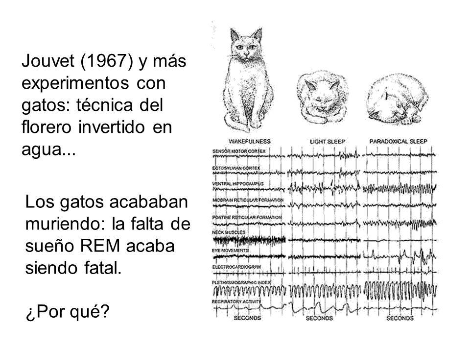 Jouvet (1967) y más experimentos con gatos: técnica del florero invertido en agua...