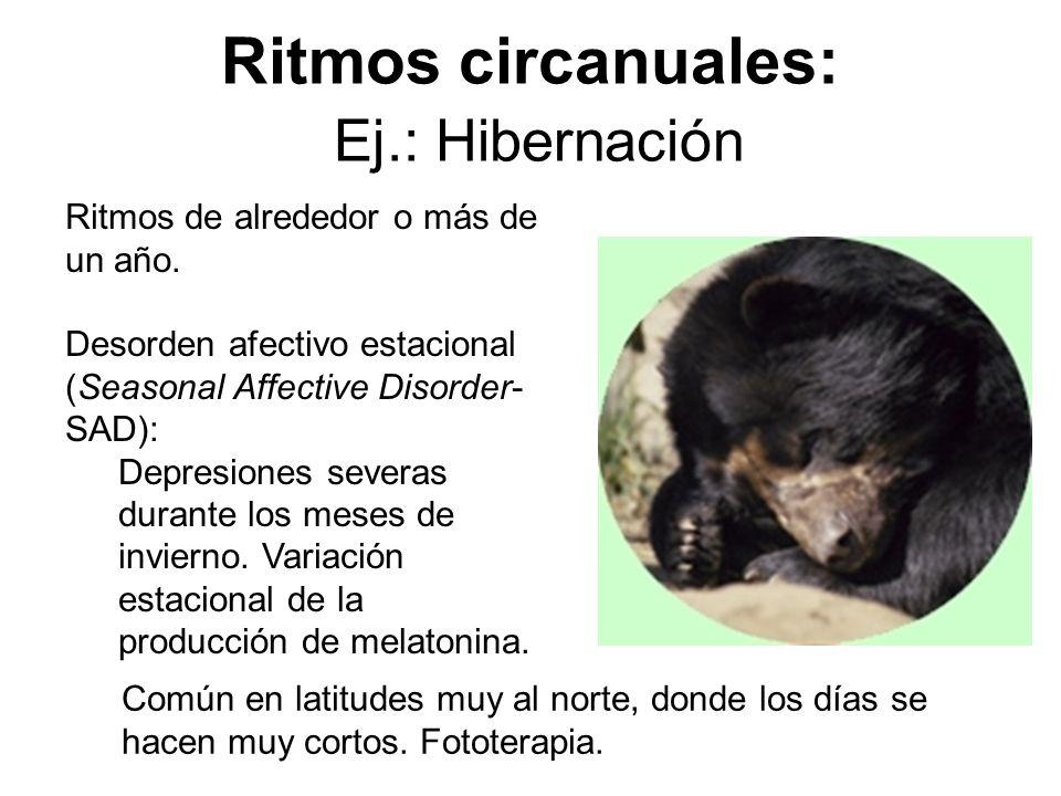 Ritmos circanuales: Ej.: Hibernación