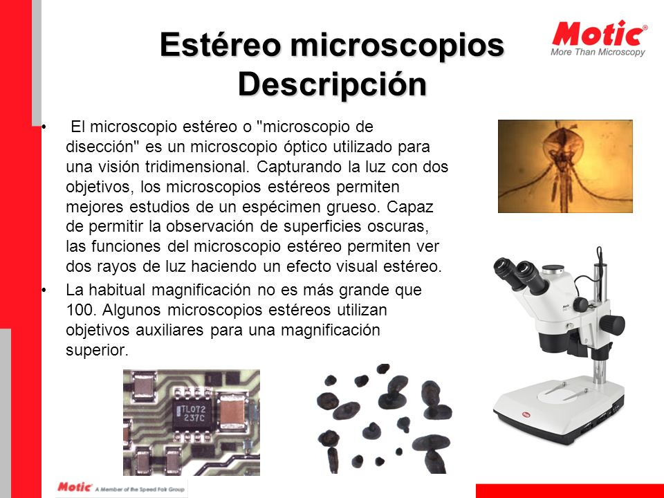 Estéreo microscopios Descripción