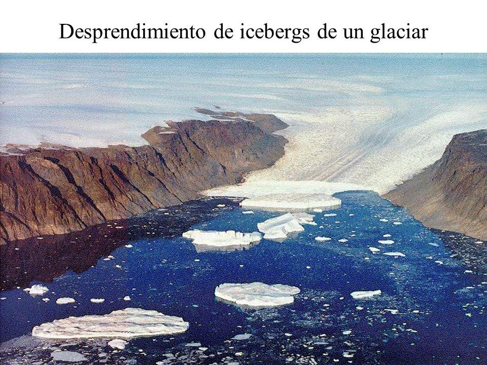 Desprendimiento de icebergs de un glaciar