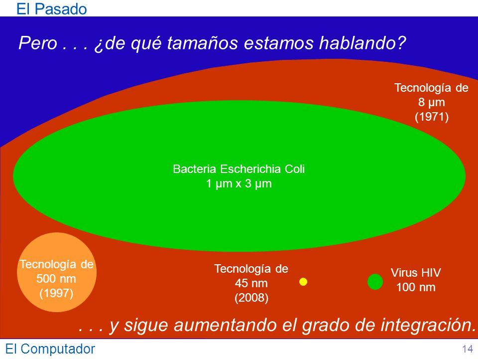 Bacteria Escherichia Coli