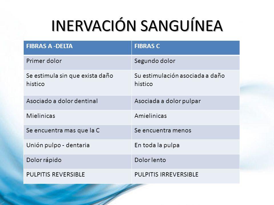 INERVACIÓN SANGUÍNEA FIBRAS A -DELTA FIBRAS C Primer dolor