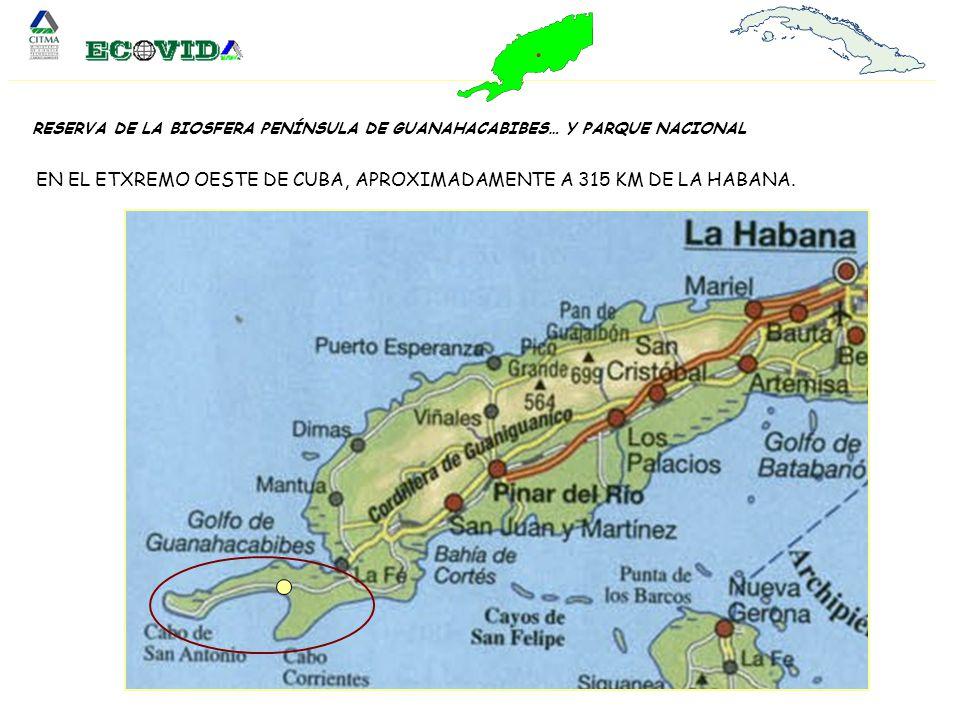 EN EL ETXREMO OESTE DE CUBA, APROXIMADAMENTE A 315 KM DE LA HABANA.