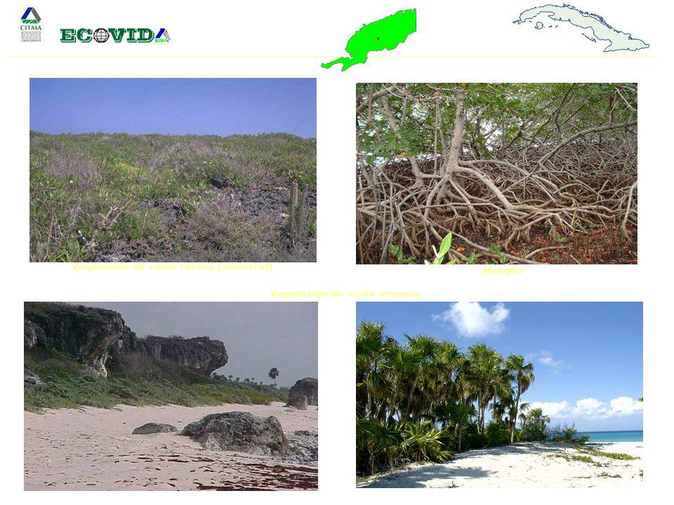 Vegetación de costa rocosa (matorral) Vegetación de costa arenosa