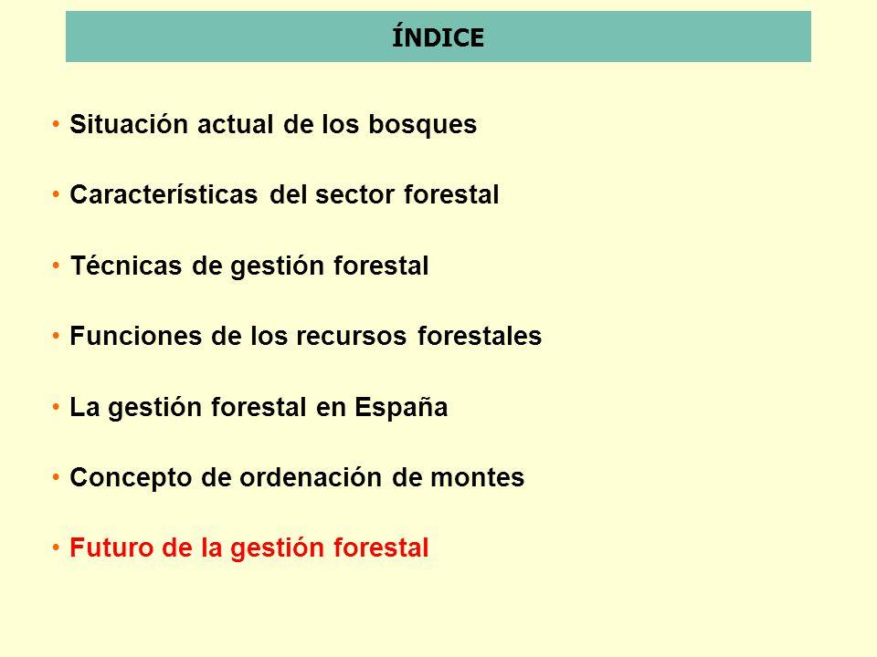 Situación actual de los bosques Características del sector forestal