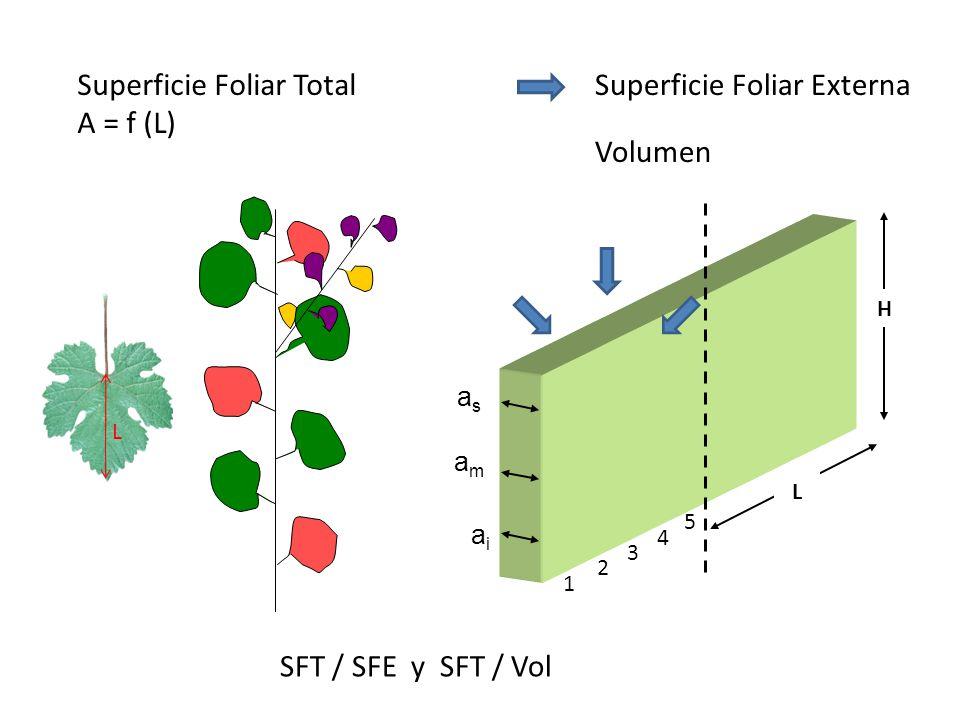 Superficie Foliar Total A = f (L) Superficie Foliar Externa Volumen