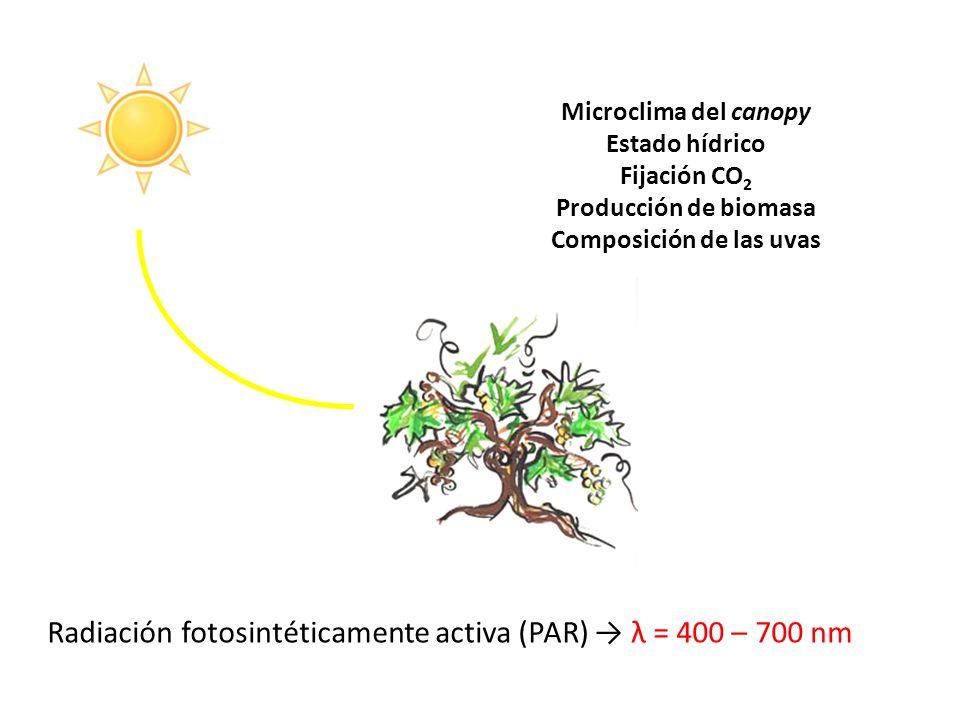 Composición de las uvas
