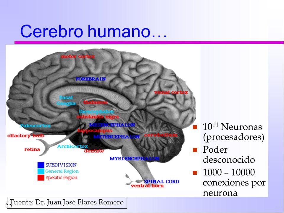 Cerebro humano… 1011 Neuronas (procesadores) Poder desconocido